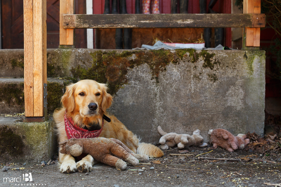 Lifestyle photography - dog and stuffed animals