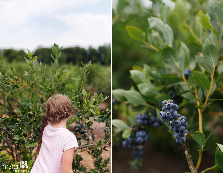 Girl picking blueberries - Lifestyle photography