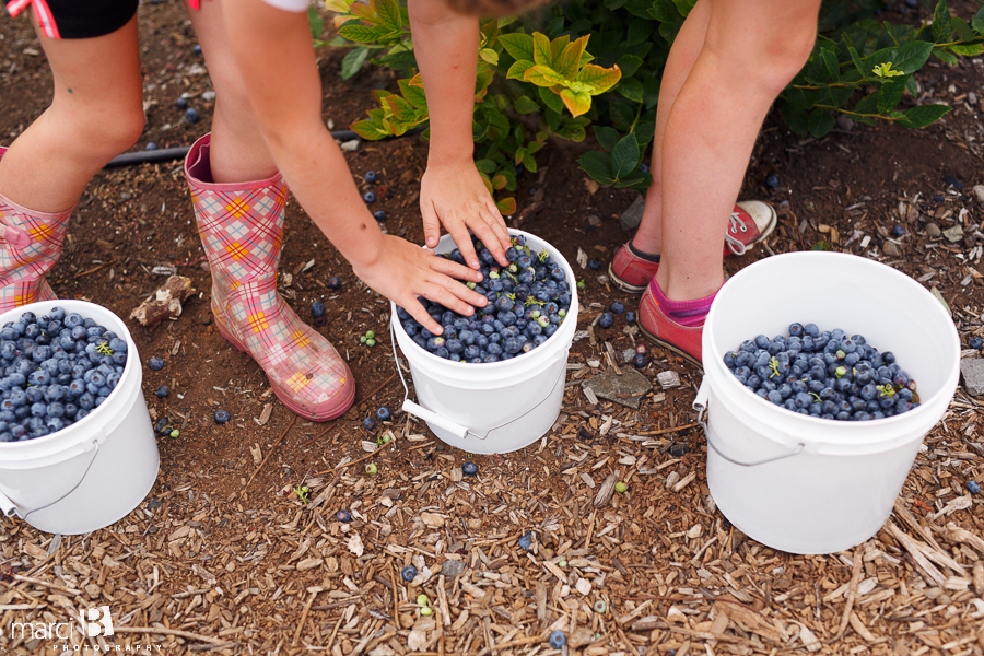Buckets of blueberries - upick - Corvallis