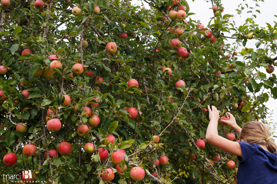 Kids picking apples - Corvallis Photography