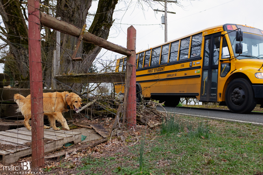 dog and schoolbus